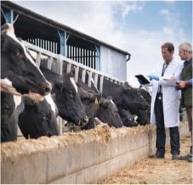 <h2>Contrôle initial sur site pour vérifier le respect des exigences de la règlementation biologique</h2>