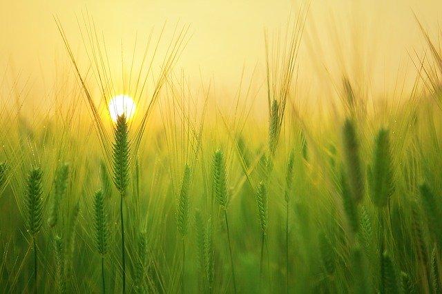 produits de protection des cultures bio